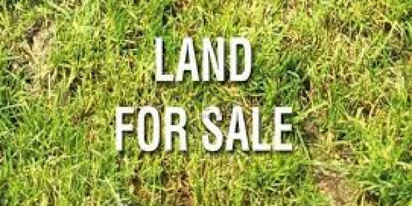 Pair Commercial Plot Is Available For Sale