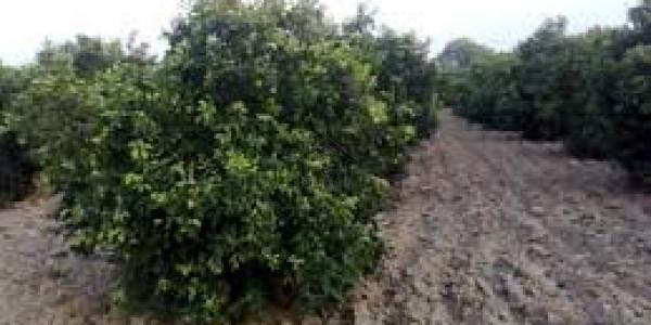 Bahria Farm House - Opportunity For Exclusive Luxury Farmhouse Plot At Reasonable Price IN Bahria Town Karachi
