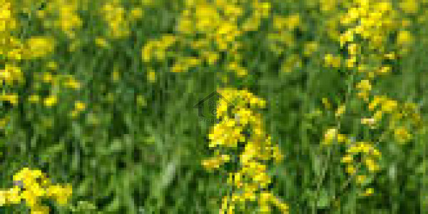 Land Is Available For Sale IN Chakwal