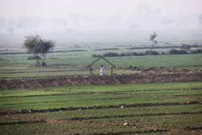 Jamber-Agricultural Land Of 128 Acre For Sale In Kasur