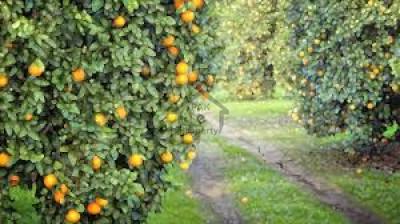 shahab khel -1200 kanal -agriculture orange land for sale