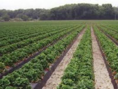 552 Kanal-Agricultural Land For Sale At Bahawalnagar