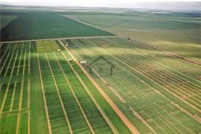 344 Kanal-Agricultural Land For Sale At Bahawalnagar
