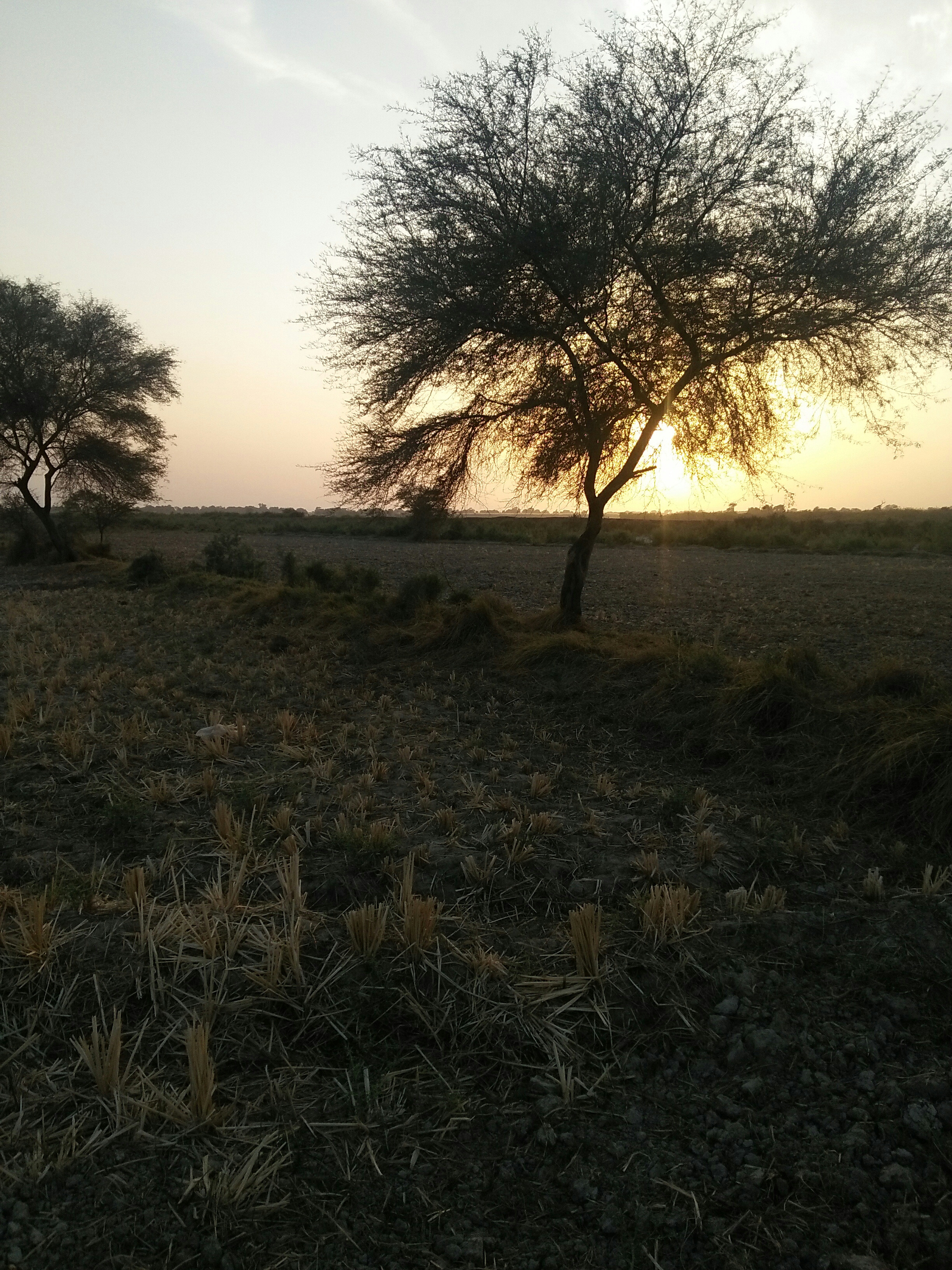 105 acre cultivated land near Hyderabad city