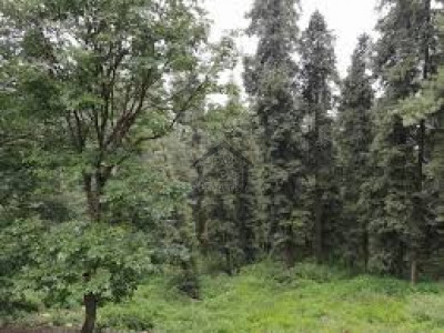 Jinnahabad, - 6 Marla - Plot Is Available For Sale  In Abbottabad .