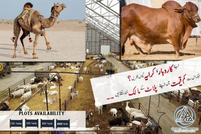 Farm house / Cattle Farm plot For Sale 1000 Sq yards